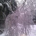 Дорога от участков 26 декабря 2010г.