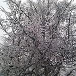 После ледяного дождя 26 декабря 2010г.