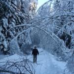 icy_trees_004