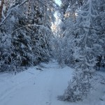 icy_trees_005