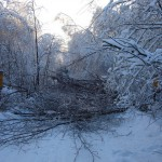 icy_trees_006