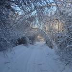 icy_trees_007