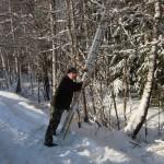 icy_trees_008