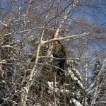 icy_trees_009