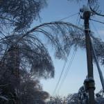 icy_trees_010