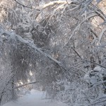 icy_trees_034
