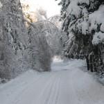 icy_trees_035