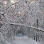 icy_trees_038
