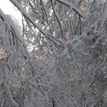 icy_trees_040