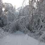 icy_trees_042