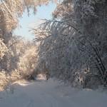 icy_trees_045