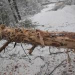 icy_trees_0453