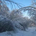 icy_trees_046