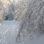 icy_trees_047