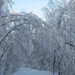 icy_trees_048