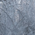 icy_trees_049