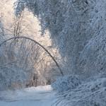 icy_trees_050