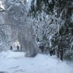 icy_trees_051