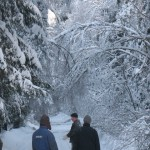 icy_trees_053