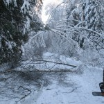icy_trees_055