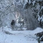 icy_trees_056