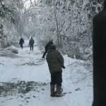 icy_trees_058