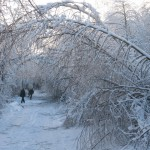 icy_trees_063