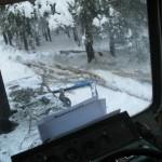 icy_trees_064