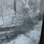 icy_trees_065