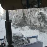 icy_trees_066