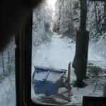 icy_trees_068