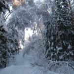 icy_trees_0368