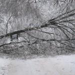 icy_trees_0439