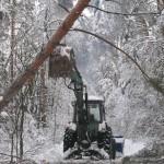 icy_trees_0452
